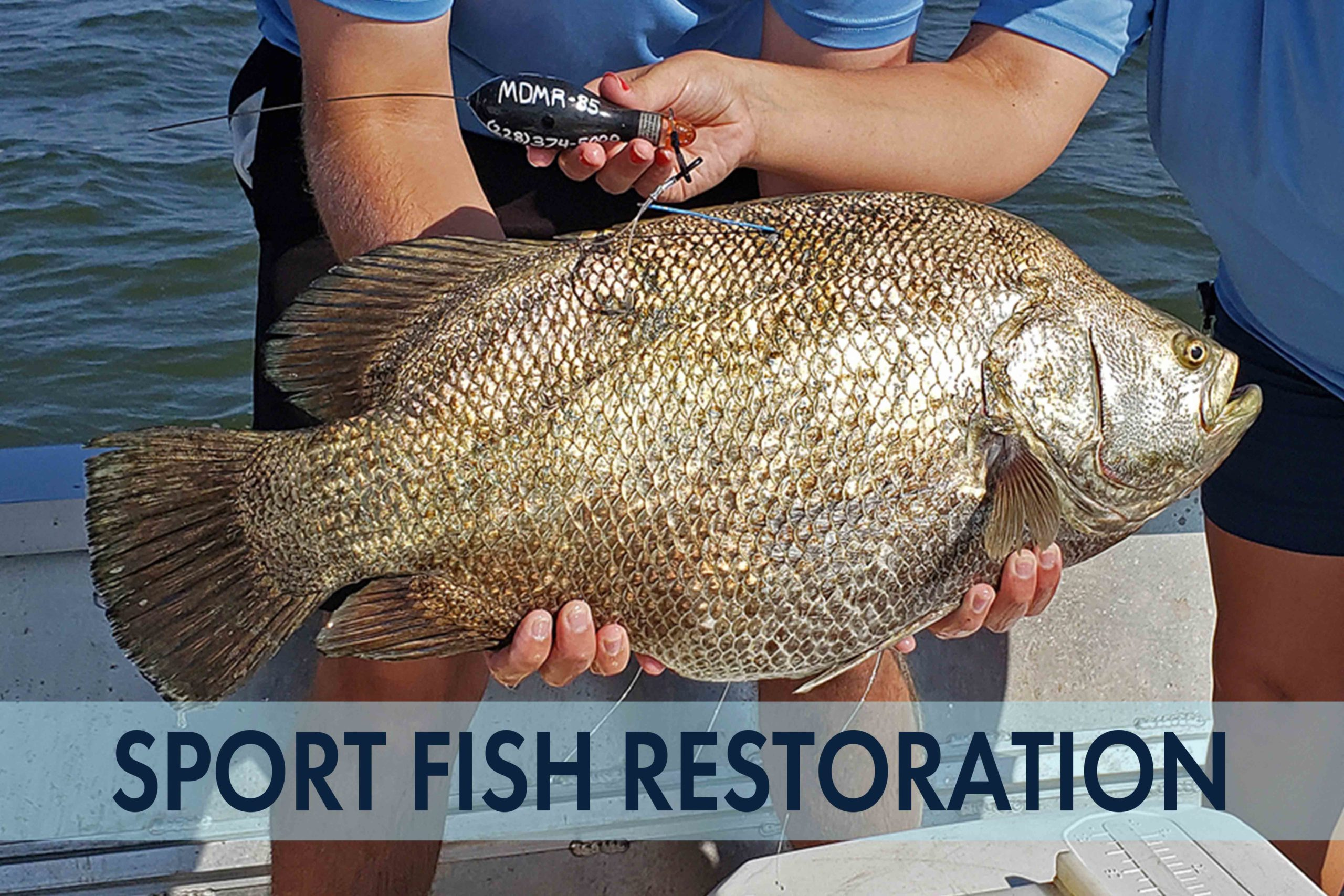 sport-fish-restoration-thumbnail